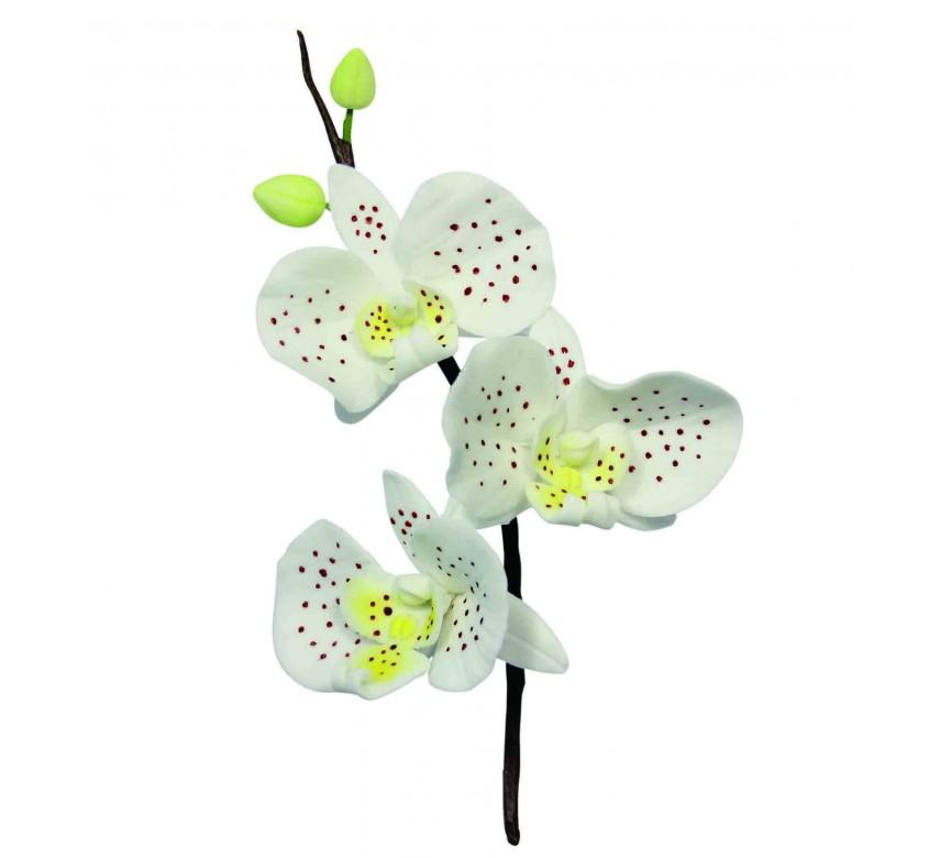 Moth Orchid Flower Petal Cutters Set/3